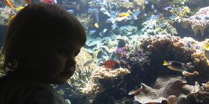 aquarium trégastel